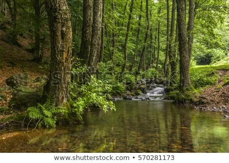 mountain stream on summer stock photo © antonio-s