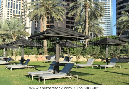 Empty sunbeds on the green grass and a palm tree Stock photo © master1305