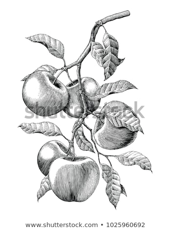 vector sketch of apple tree stock photo © galyna