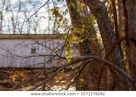 Zielone sierżant pokryty most Zdjęcia stock © njnightsky