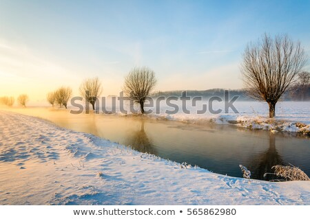 Winter landscape with white willows covered with frost Stock photo © Fesus
