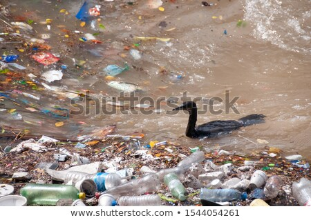 Plastic trash bird Stock photo © Tawng