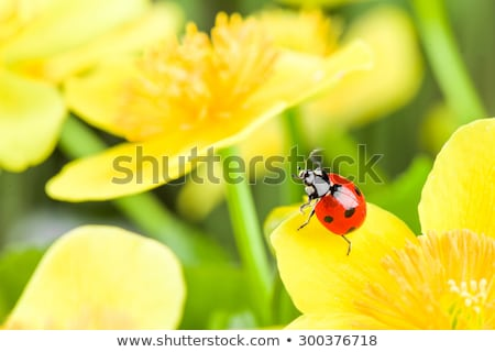A garden with a blooming flowers and a ladybug Stock photo © bluering