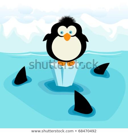 Little penguin 3 Stock photo © sifis