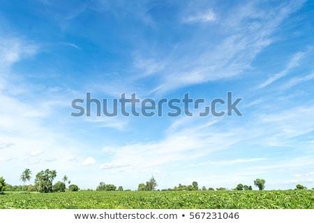 Yeşil ot alan mavi gökyüzü bulutlar ufuk gökyüzü Stok fotoğraf © karandaev