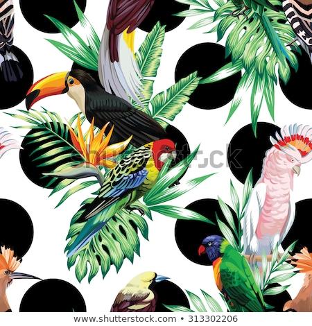Színes papagáj festmény fehér vektor mosoly Stock fotó © NikoDzhi