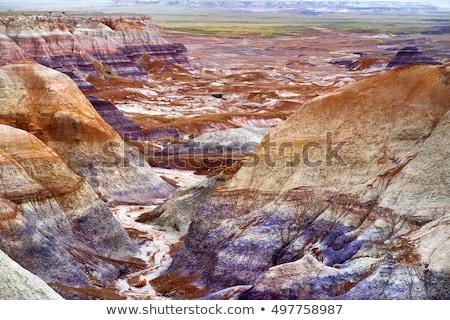 森林 公園 米国 自然 描いた 砂漠 ストックフォト © asturianu