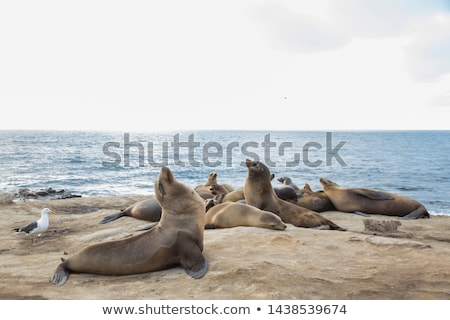Sea lion on the beach Stock photo © bluering
