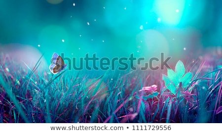 Bright night butterflies stock photo © blackmoon979