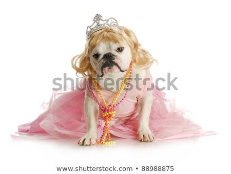 женщины собака тиара ПЭТ Сток-фото © willeecole