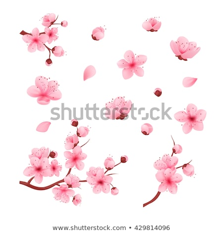 Set sakura fiori rosa bianco primavera Foto d'archivio © blackmoon979