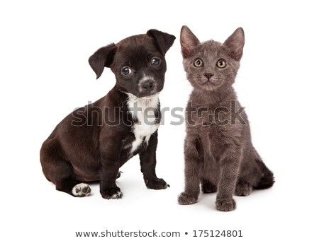 family looking to adopt a pet from animal shelter stock photo © kzenon
