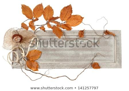 сезонный совета лента осень иллюстрация украшенный Сток-фото © lenm