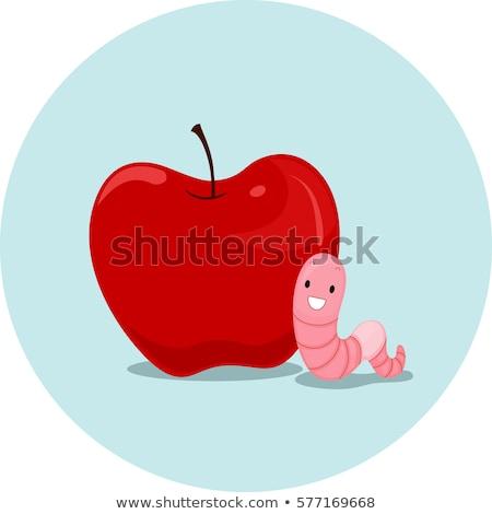 Appel worm illustratie regenworm betekenis woord Stockfoto © lenm
