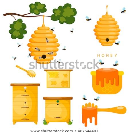 abelha · ícone · isolado · branco · natureza · fundo - foto stock © maryvalery