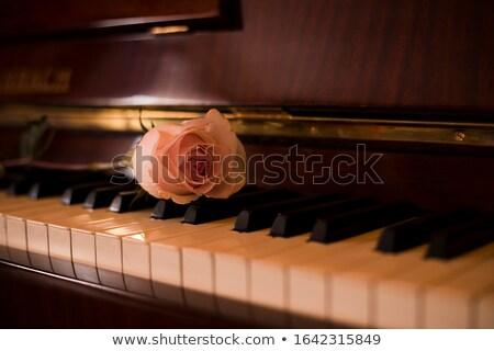 Musical sleutel rozen gouden ingericht rode rozen Stockfoto © blackmoon979