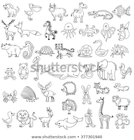 Dier doodle schets kwal illustratie natuur Stockfoto © colematt