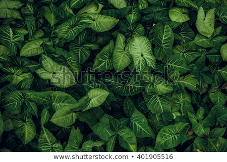 Beautiful green leaf texture with drops of water Stock photo © ruslanshramko