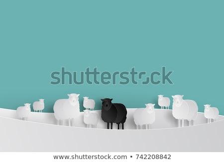 Koyun örnek beyaz ayakta çiftlik karikatür Stok fotoğraf © lenm