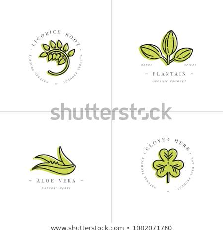 Stockfoto: Kleur · vintage · natuurlijke · cosmetica · embleem · label