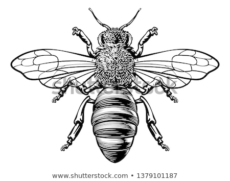 Honey Bumble Bee Woodcut Vintage Bumblebee Drawing Stock photo © Krisdog