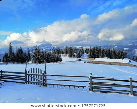 beyaz · huş · ağacı · alan · ağaçlar · mavi · gökyüzü · gökyüzü - stok fotoğraf © frimufilms