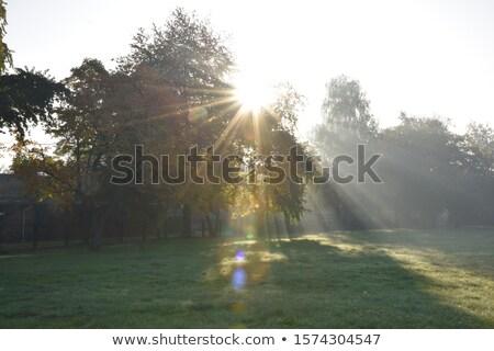 Sunrise lake views through the treetops Stock photo © lovleah