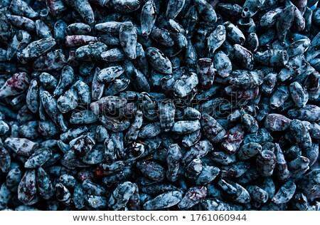 Deep blue honeysuckle berries Stock photo © veralub