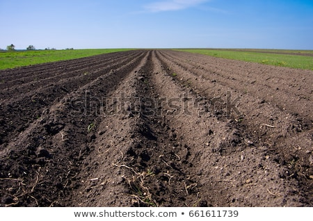 Closeup of a plowed field prepared for new planting.  Stock photo © meinzahn