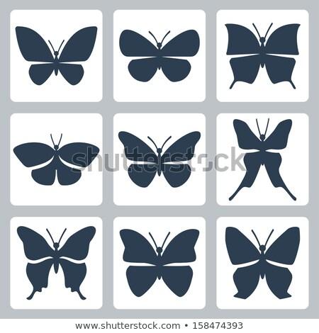 Icon swallowtail Stock photo © zzve