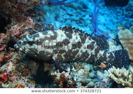 Kamuflaż pływanie akwarium ryb morza Zdjęcia stock © Lynx_aqua