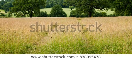 long trail through the grassy field stock photo © oleksandro