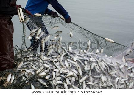 рыбак рыбы морем лет день пляж Сток-фото © OleksandrO