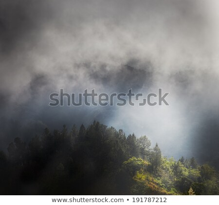 Sis orman Jamaika fotoğrafçılık caribbean açık havada Stok fotoğraf © bmonteny