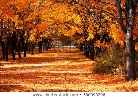 Geçit ağaçlar sonbahar gün ağaç orman Stok fotoğraf © Elnur