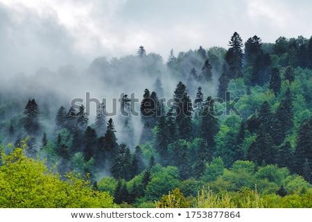 panoramic mountain bieszczady stock photo © pixelman