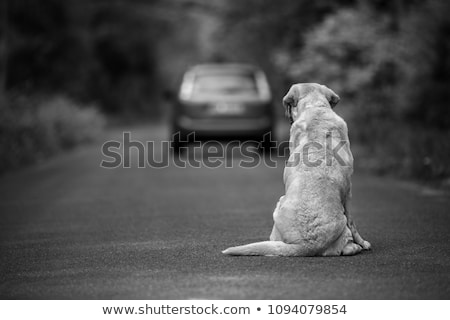 捨てられた · 失わ · 犬 · ジャックラッセル · だけ - ストックフォト © adrenalina
