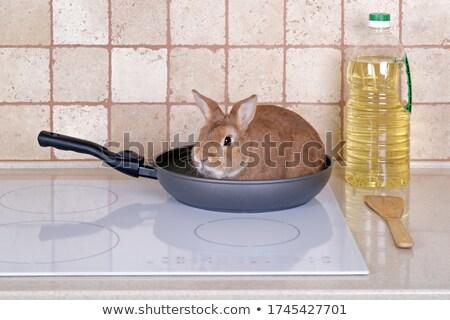 Conejo sesión sartén aislado blanco granja Foto stock © deandrobot