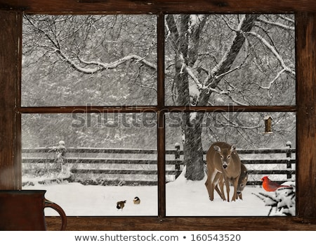 A window with a view of the deer outside Stock photo © bluering