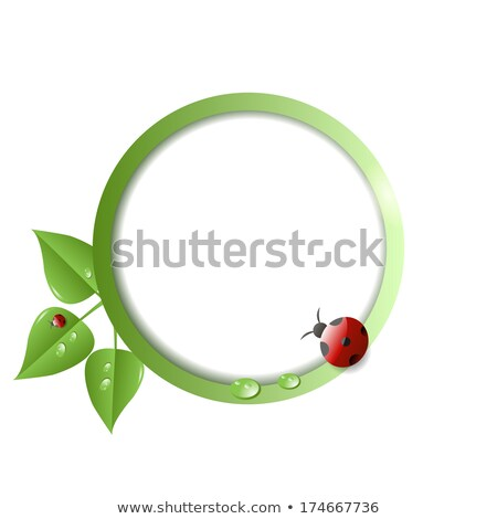 Natural life concept with ladybug insect on leaf Stock photo © cienpies