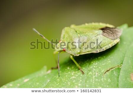 green bug stock photo © craig