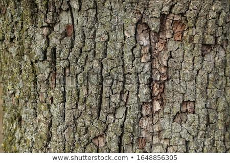 görmek · ağaç · havlama · duvar · doğa - stok fotoğraf © raywoo