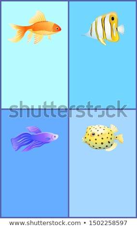 Gold Betta and Bbutterfly Boxfish Fish Color Banner Stock photo © robuart