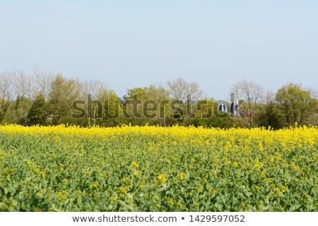 Casas suporte campo branco árvores fazenda Foto stock © sarahdoow