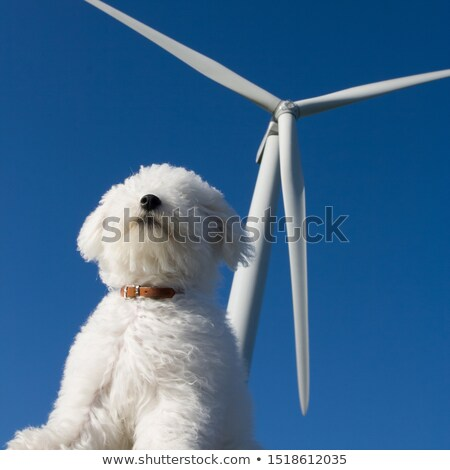 The dog sniffing the air, turnines in the background Stock photo © tilo