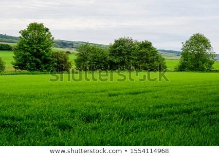 idyllique · printemps · temps · paysages · rural · sud - photo stock © julietphotography