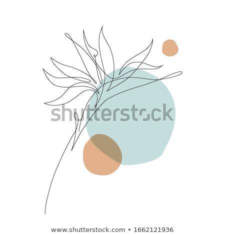 Strelitzia Stock photo © neirfy