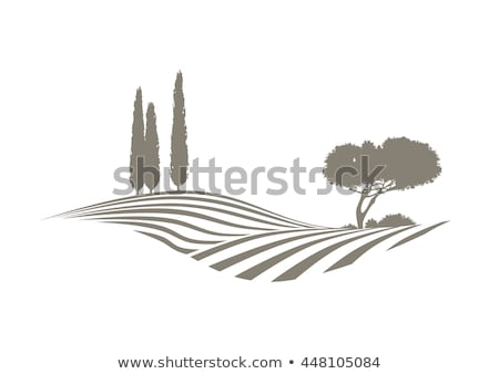 plowed field background at Portugal Stock photo © inaquim