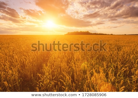 Country Sunsets Stock photo © mobi68