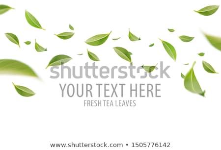 Vliegen groen blad permanente plant blad Stockfoto © rhamm